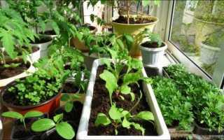 Как выращивать овощи на балконе и что для этого нужно