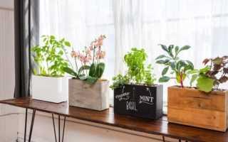 Деревянные горшки для цветов (24 фото): выбираем цветочные горшки из дерева для кактусов, суккулентов, туй и других растений. Особенности моделей