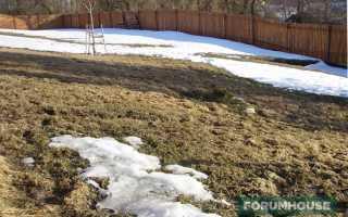 Газон или лужайка: как ухаживать с наступлением весны