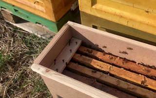 Делаем улей на две пчелосемьи своими руками