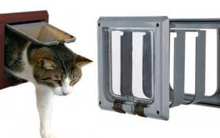 Дверца для кошки: разновидности и особенности выбора дверей