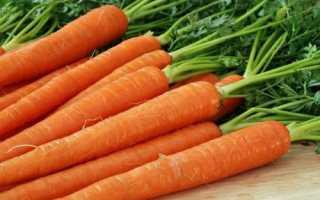 Агротехника моркови. Основные секреты выращивания. Семь правил богатого урожая моркови