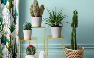Виды кактусов: листовые и колючие кактусы, названия цветущих и пушистых растений, уход и размножение
