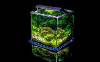 Аквариум из стекла своими руками: подробная пошаговая инструкция