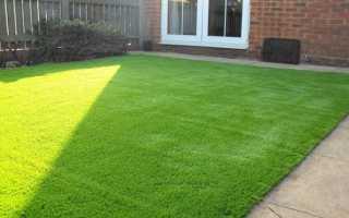 Газоны «лилипут» (41 фото): многолетняя низкорослая газонная трава для ленивых, которую не надо стричь. Какую траву лучше выбрать? Отзывы покупателей