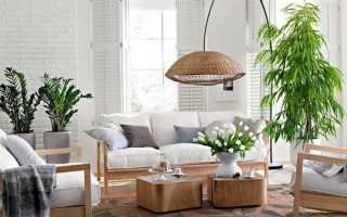 Где лучше выращивать цветы в квартире